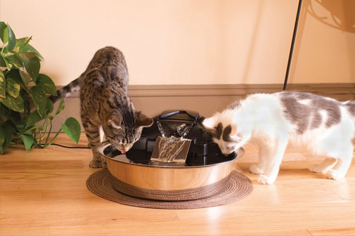 Multiple cats can drink from water fountain